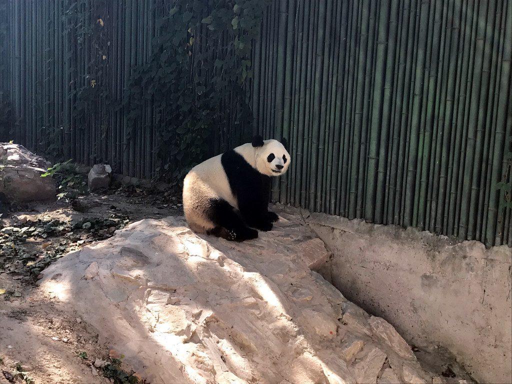 Beijing Zoo - Beijing, China