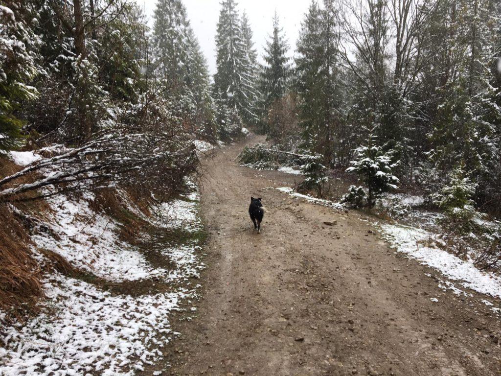 Winter in Szczawnica, Poland